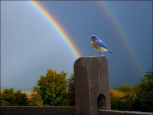 bluebird-and-rainbow